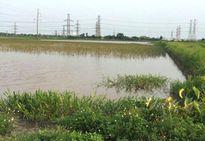 Xã Tự Nhiên, huyện Thường Tín: Hàng chục héc ta đất lúa bị bỏ hoang