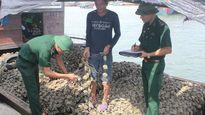 Đồn BP Trà Cổ bắt giữ và tiêu hủy 10 tấn hàu giống nhập lậu