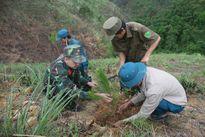 Sơn La: Tỷ lệ trồng mới rừng đạt thấp