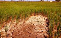 Ứng phó với biến đổi khí hậu: Chính sách không theo kịp… cuộc sống