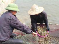 Phương pháp nuôi tôm an toàn trong mùa mưa