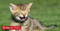 """""""Tan chảy"""" với những chú mèo siêu dễ thương qua khoảnh khắc đời thường"""