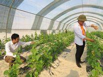 Hai thạc sỹ làm nông nghiệp sạch trên 5ha đất cát