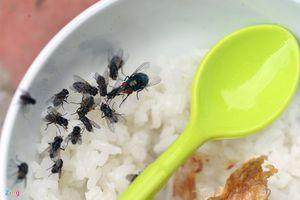 Mối nguy hiểm khi phải sống chung với ruồi