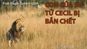 Con của Sư tử Cecil bị bắn chết