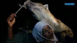 Lạ lùng tour du lịch cho linh cẩu ăn