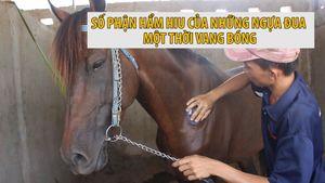 Những chú ngựa đua cuối cùng và giấc mơ hảo mã lại một ngày tung vó