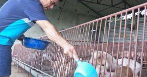 Giá lợn hôm nay 25.7: Miền Bắc 37.000 đ/kg, miền Tây 32.000 đ/kg, Đồng Nai 35.000 đ/kg