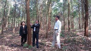 Trồng rừng gỗ lớn, nâng cao giá trị
