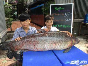 Cá trắm đen kỷ lục nặng 55kg 'bơi' từ Thác Bà về Hà NộiThích và chia sẻ bài viết này qua: