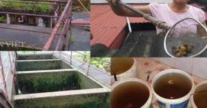 Nước sạch toàn hết chết ở Ninh Bình: Đã lấy mẫu nước để kiểm nghiệm