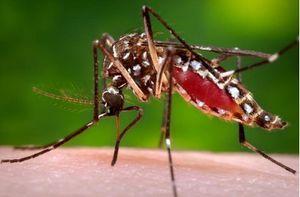 Muỗi truyền bệnh sốt xuất huyết năm nay 'khôn' hơn các năm trước?