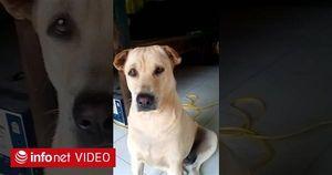Chú chó dỗi chủ chỉ vì miếng ăn đến mồm rồi còn bị lừa