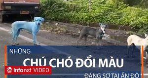 Những chú chó đổi màu đáng sợ tại Ấn Độ