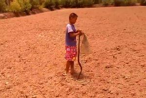Clip: Cậu bé 10 tuổi trổ tài bắt rắn dễ như trở bàn tay