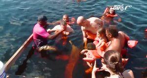 Chiêm ngưỡng cá heo hồng độc đáo, cực hiếm ở Brazil