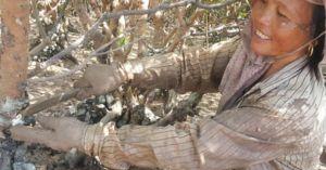 Chị em miền biển bò trườn khắp rừng vẹt săn đặc sản 'phòng the'