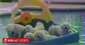 """Hài hước với những chú chó thích nghịch nước """"oái oăm"""" nhất trên đời"""