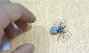 Thú vị cách chế tạo robot nhện 8 chân siêu tí hon