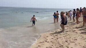 Du khách chạy tán loạn khi cá mập vào bờ săn mồi!