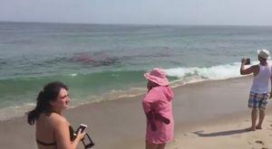 Cá mập xé xác hải cẩu cạnh bờ biển