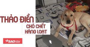 Người nước ngoài lên tiếng cảnh báo tình trạng chó bị đầu độc hàng loạt ở Thảo Điền