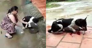 Clip nóng nhất ngày: Người phụ nữ dùng dao chặt chân chú chó dã man