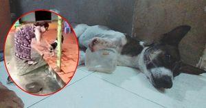 Dân mạng xúc động khi chú chó bị chủ chặt chân được cứu giúp, sự thật không phải thế!