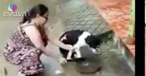 """Người phụ nữ gây phẫn nộ vì cầm dao chặt chân chó: """"Tôi chặt chân để bảo vệ nó"""""""