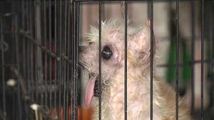 Những chó mèo bị đối xử tàn tệ được giải cứu
