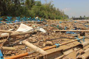 Đầm tôm tan hoang sau bão, người nuôi mất tiền tỷ