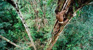 Bộ lạc sống trên cây cao 50m tách biệt với thế giới