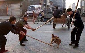 Chó thả rông ở các nước châu Á: Đáng thương hay đáng trách?
