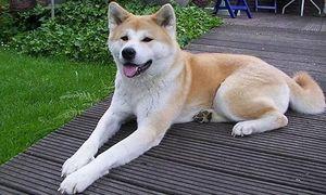 Sửng sốt với chú chó thông minh đào đất 'giấu' bánh
