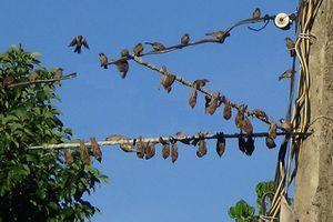 Clip: Săn bắt chim sẻ bằng keo dính