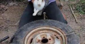 Tròn mắt xem bắt thỏ bằng bánh xe