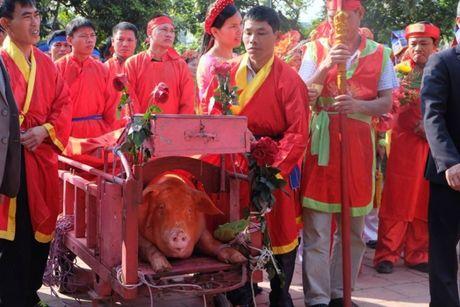 Le hoi chem lon o Bac Ninh 2016: Ong In duoc ruoc di 'tram' kin - Anh 2