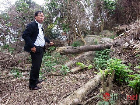 Da Nang: Chinh thuc cong bo quyet dinh thanh tra vu pha rung Son Tra - Anh 1