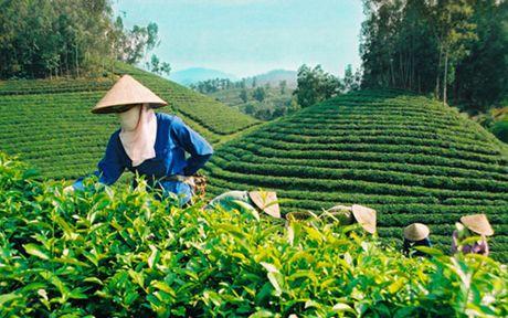 Thuong hieu Che Viet Nam van con qua mo nhat - Anh 1