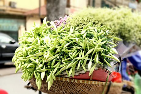 Hoa loa ken trang tinh khoi mang thang Tu ve pho - Anh 11