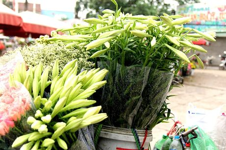 Hoa loa ken trang tinh khoi mang thang Tu ve pho - Anh 3