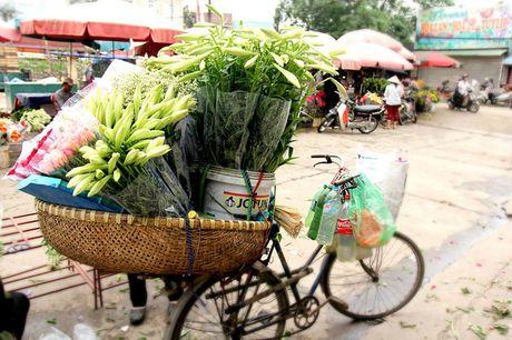 Hoa loa ken trang tinh khoi mang thang Tu ve pho - Anh 6