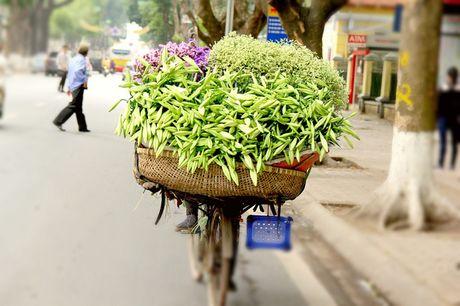Hoa loa ken trang tinh khoi mang thang Tu ve pho - Anh 7