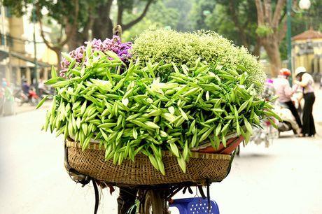 Hoa loa ken trang tinh khoi mang thang Tu ve pho - Anh 8