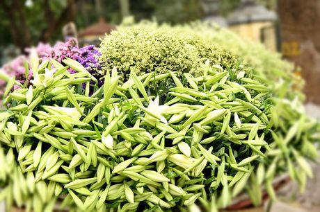 Hoa loa ken trang tinh khoi mang thang Tu ve pho - Anh 9