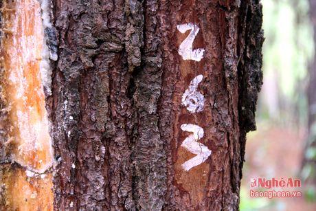 'Vang trang' tren vung dat can Nghi Van - Anh 6