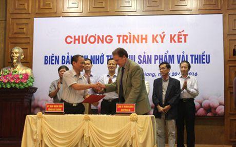 Bac Giang co 1.000 tan vai thieu chuan GlobalGAP danh cho xuat khau - Anh 1