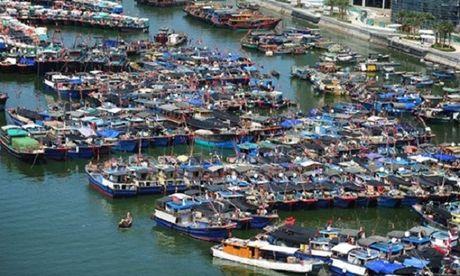 Thu doan tan diet hai san khap the gioi cua ngu dan Trung Quoc - Anh 1