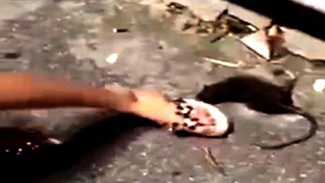 10 clip 'nong': Bat thuy quai 'khong lo' dai 4m tren song - Anh 1