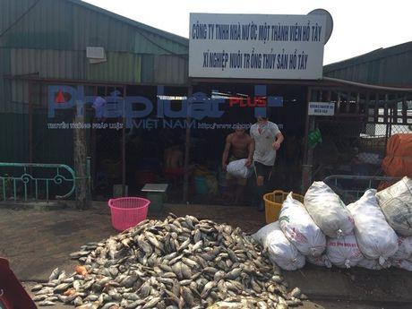 Chu tich Nguyen Duc Chung thi sat tim hieu hien tuong ca chet hang loat o ho Tay - Anh 5